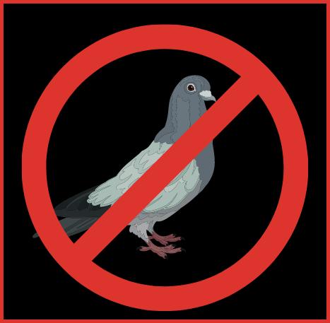 Pigeon Control Pros